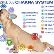 Chakra balancing for your pets!